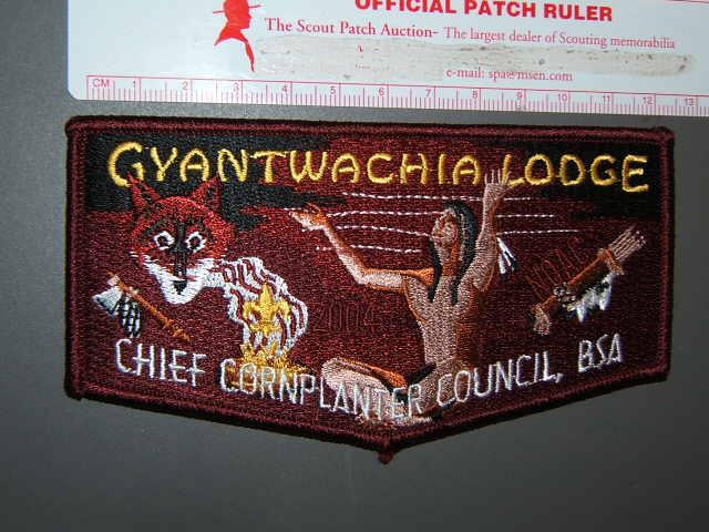 255 Gyrantwachia flap